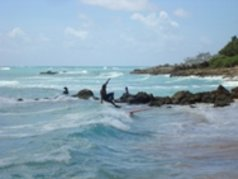 Barbados Surfer s Point 6